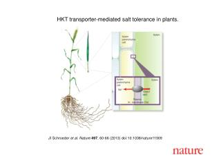 HKT transporter-mediated salt tolerance in plants.