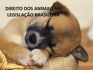 DIREITO DOS ANIMAIS NA LEGISLAÇÃO BRASILEIRA