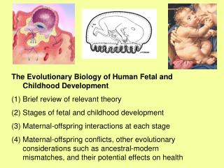 The Evolutionary Biology of Human Fetal and  Childhood Development