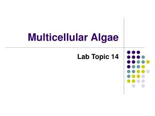 Multicellular Algae