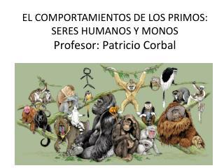 EL COMPORTAMIENTOS DE LOS PRIMOS: SERES HUMANOS Y MONOS Profesor: Patricio  Corbal