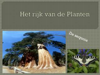 Het  rijk  van de  Planten