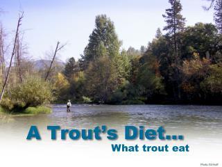 A Trout's Diet…