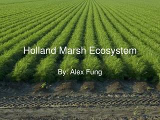 Holland Marsh Ecosystem