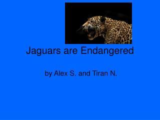 Jaguars are Endangered