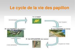 Le cycle de la vie des papillon