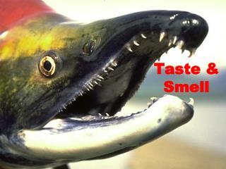 Taste & Smell