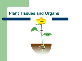 Plant Tissues and Organs