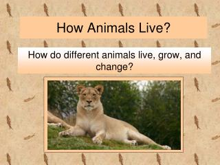 How Animals Live?