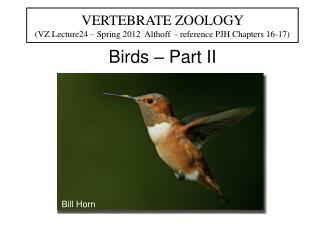Birds – Part II