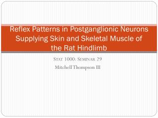 Reflex Patterns in Postganglionic Neurons Supplying Skin and Skeletal Muscle of the Rat Hindlimb