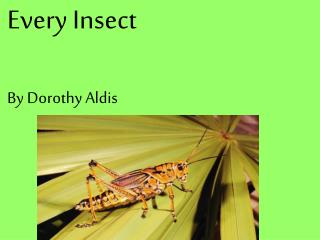 Every Insect By Dorothy Aldis