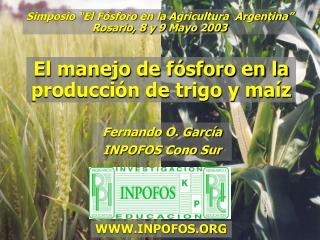 El manejo de fósforo en la producción de trigo y maíz