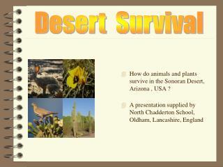 How do animals and plants survive in the Sonoran Desert, Arizona , USA ?
