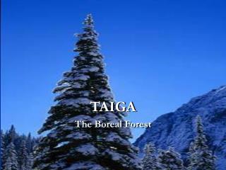 TAIGA The Boreal Forest