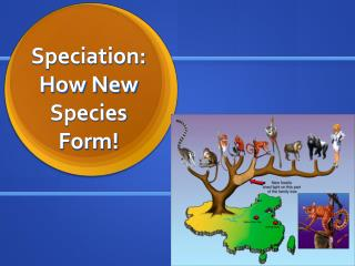 Speciation: How New Species Form!
