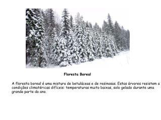 A floresta boreal é uma mistura de betuláceas e de resinosas. Estas árvores resistem a