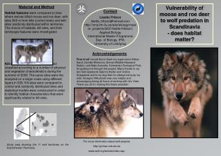 Vulnerability of moose and roe deer to wolf predation in Scandinavia - does habitat matter?
