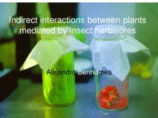 Indirect interactions between plants mediated by insect herbivores