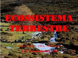 ECOSSISTEMA TERRESTRE