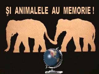ŞI  ANIMALELE  AU  MEMORIE !