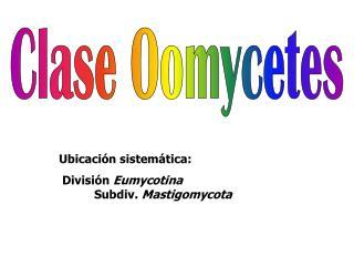 Clase Oomycetes
