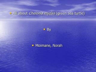 All about  Chelonia mydas  (green sea turtle)  By Moimane, Norah