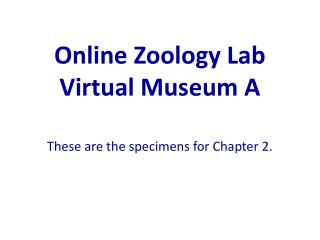 Online Zoology Lab Virtual Museum A