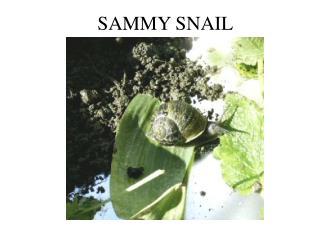 SAMMY SNAIL