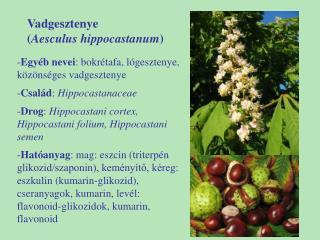 Vadgesztenye  ( Aesculus hippocastanum )