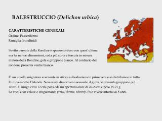 BALESTRUCCIO ( Delichon urbica ) CARATTERISTICHE GENERALI Ordine: Passeriformi