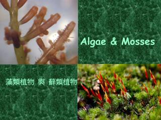 Algae & Mosses
