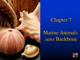 Chapter 7 Marine Animals  sans  Backbone