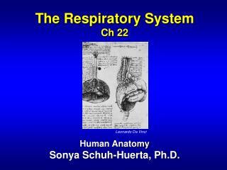 The Respiratory System Ch 22 Human Anatomy Sonya Schuh-Huerta, Ph.D.