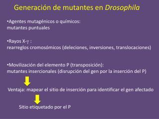 Generación de mutantes en  Drosophila