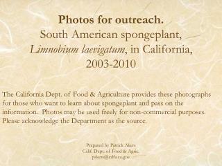 Photos for outreach. South American spongeplant,  Limnobium laevigatum , in California, 2003-2010
