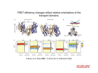 N Akyuz  et al. Nature  000 , 1-5 (2013) doi:10.1038/nature12265
