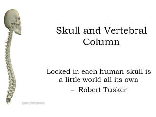 Skull and Vertebral Column