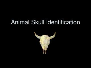 Animal Skull Identification