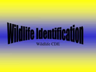 Wildlife CDE