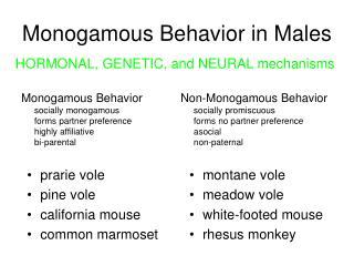 Monogamous Behavior in Males