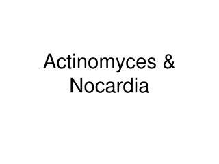 Actinomyces & Nocardia
