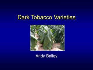 Dark Tobacco Varieties