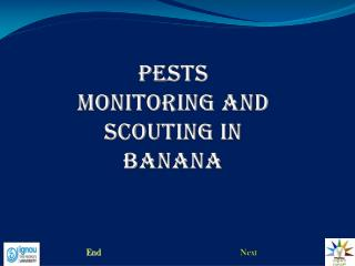 Pests monitoring and scouting in banana