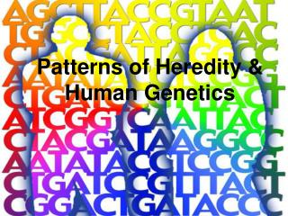 Patterns of Heredity & Human Genetics