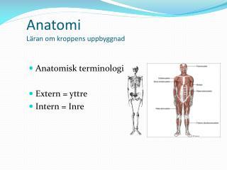Anatomi  Läran om kroppens uppbyggnad