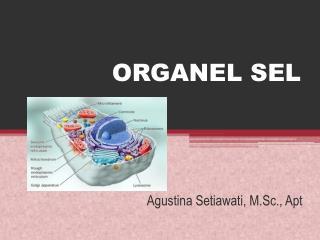 ORGANEL SEL