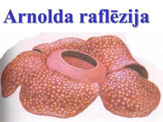 Arnolda raflēzija