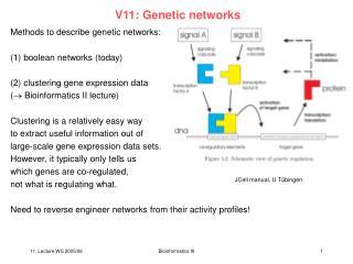 V11: Genetic networks