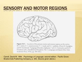 Sensory and Motor Regions